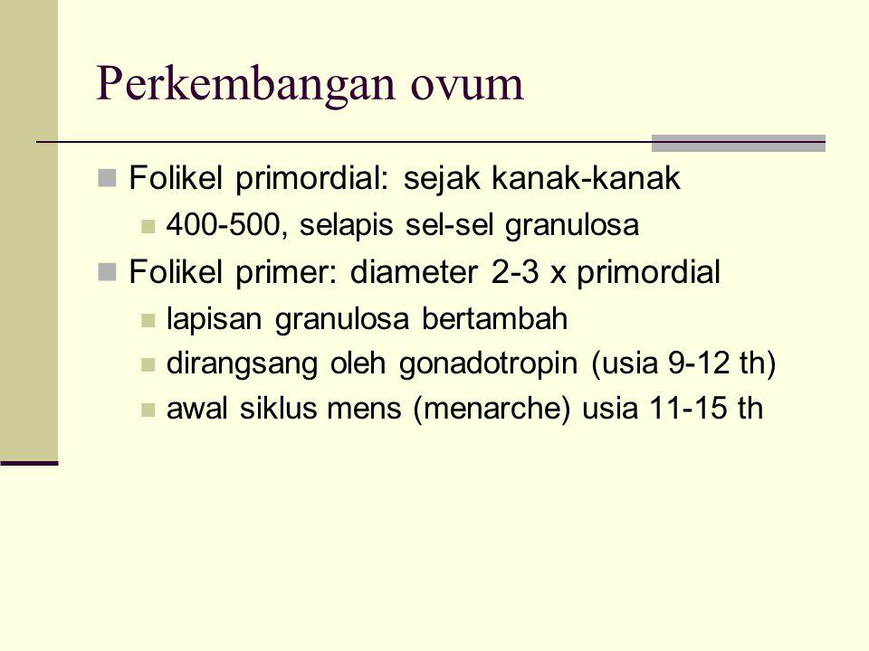 Perkembangan ovum Folikel primordial: sejak kanak-kanak