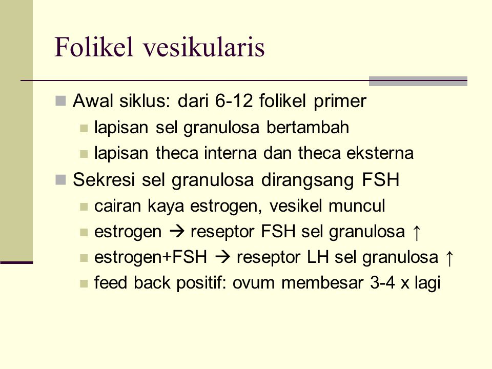 Folikel vesikularis Awal siklus: dari 6-12 folikel primer