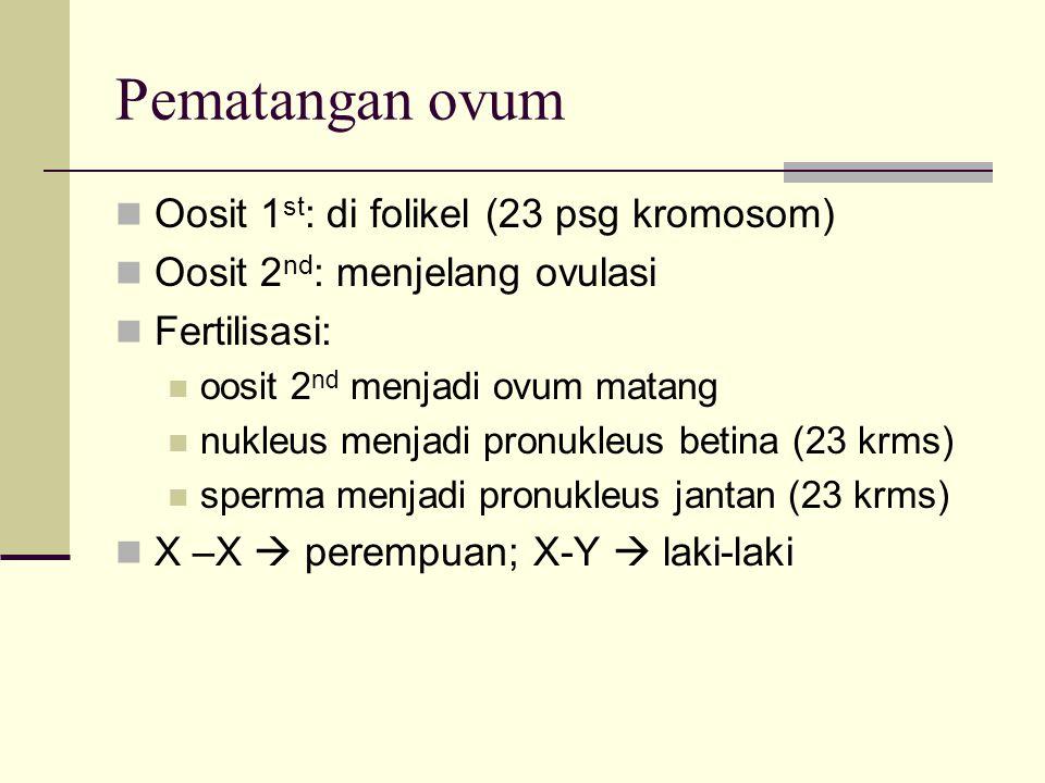 Pematangan ovum Oosit 1st: di folikel (23 psg kromosom)