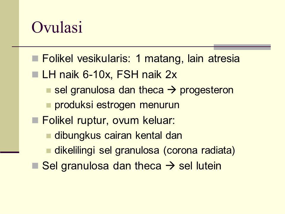 Ovulasi Folikel vesikularis: 1 matang, lain atresia