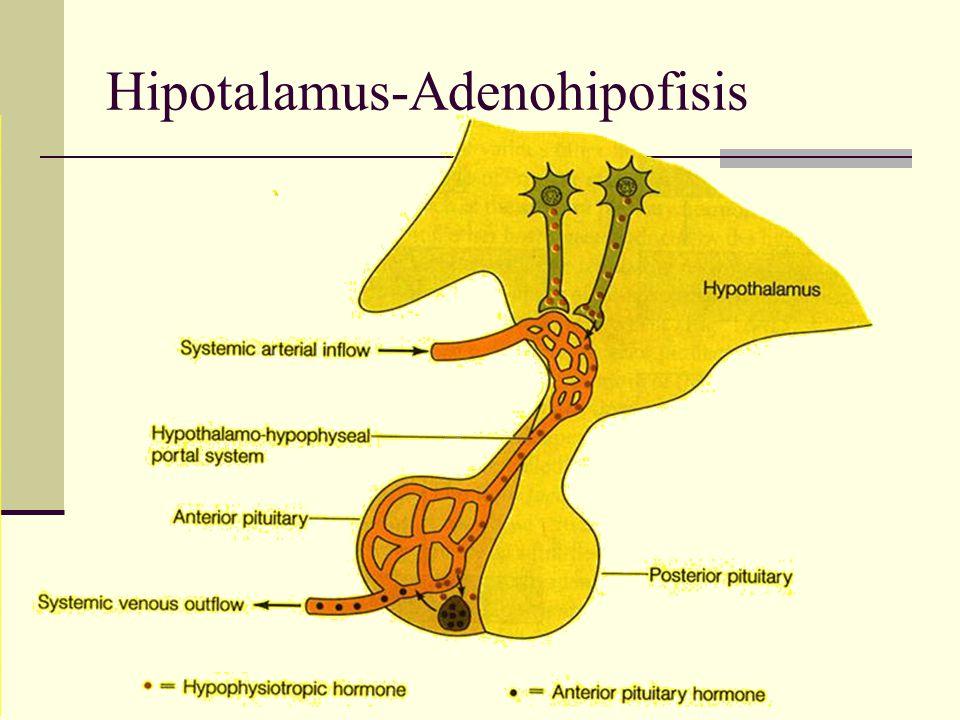 Hipotalamus-Adenohipofisis
