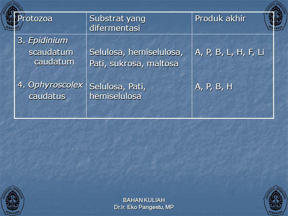 Substrat yang difermentasi Produk akhir 3. Epidinium