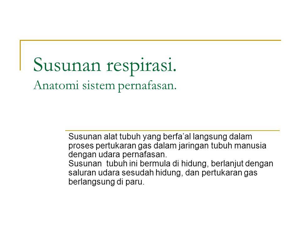 Susunan respirasi. Anatomi sistem pernafasan.