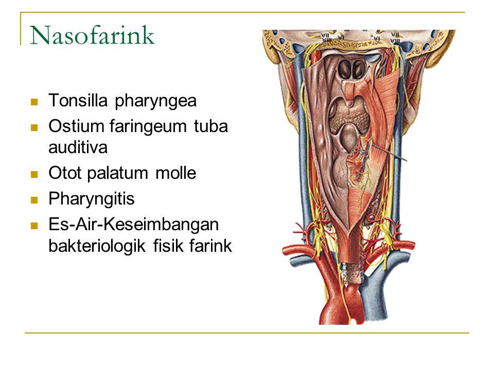 Nasofarink Tonsilla pharyngea Ostium faringeum tuba auditiva