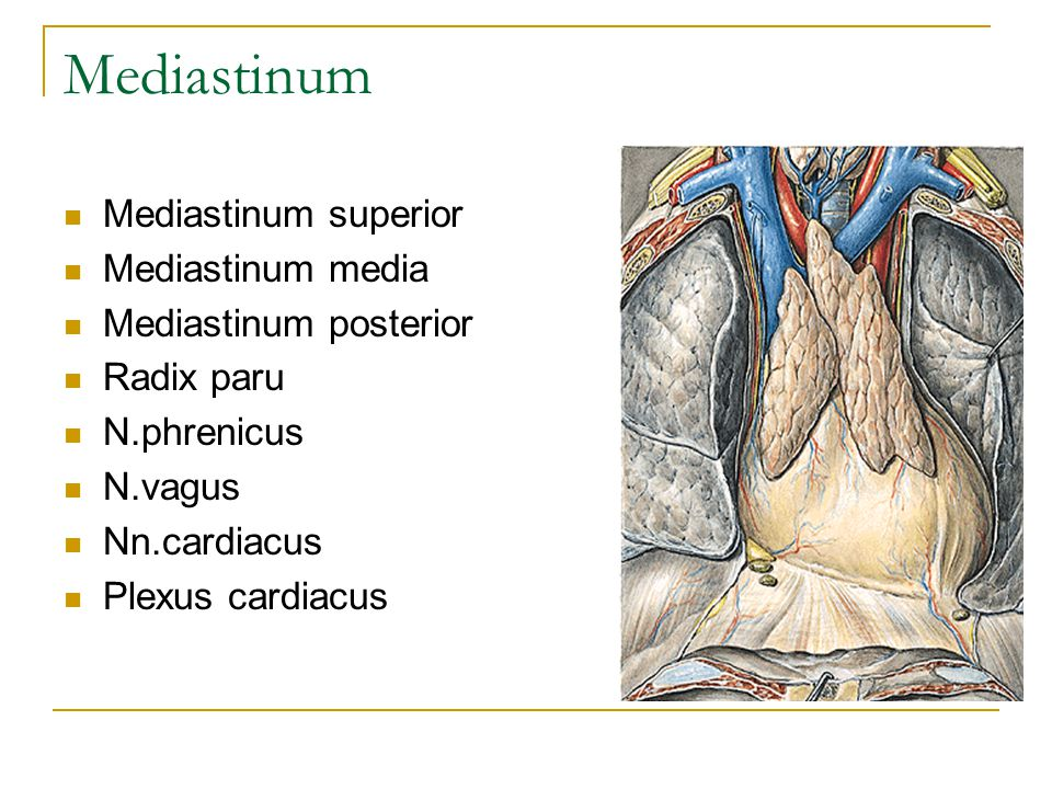 Mediastinum Mediastinum superior Mediastinum media