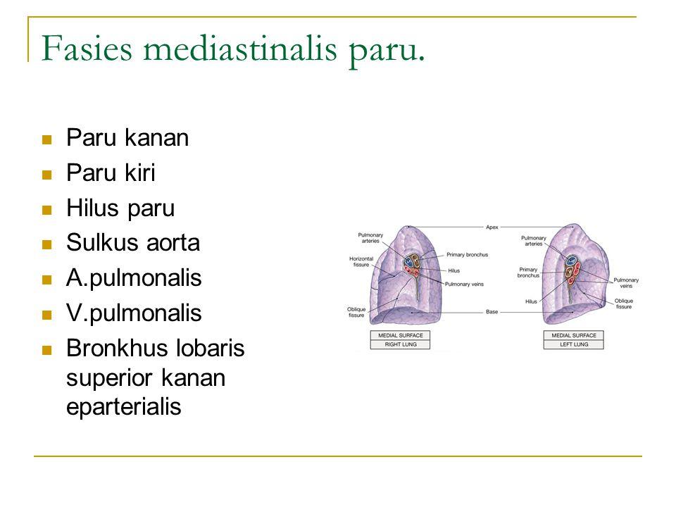 Fasies mediastinalis paru.