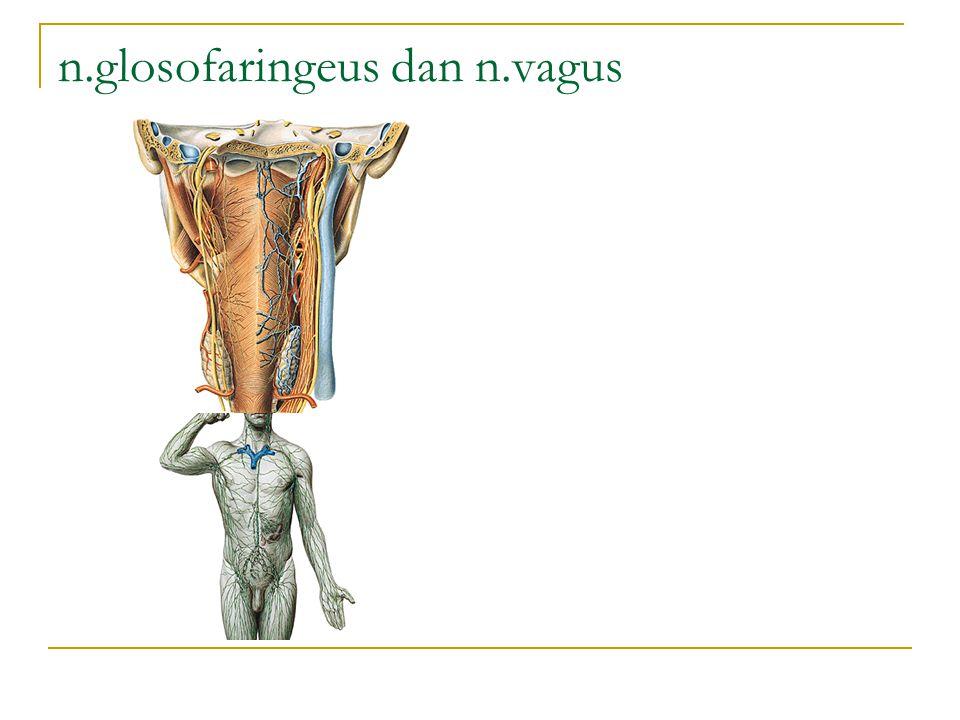 n.glosofaringeus dan n.vagus