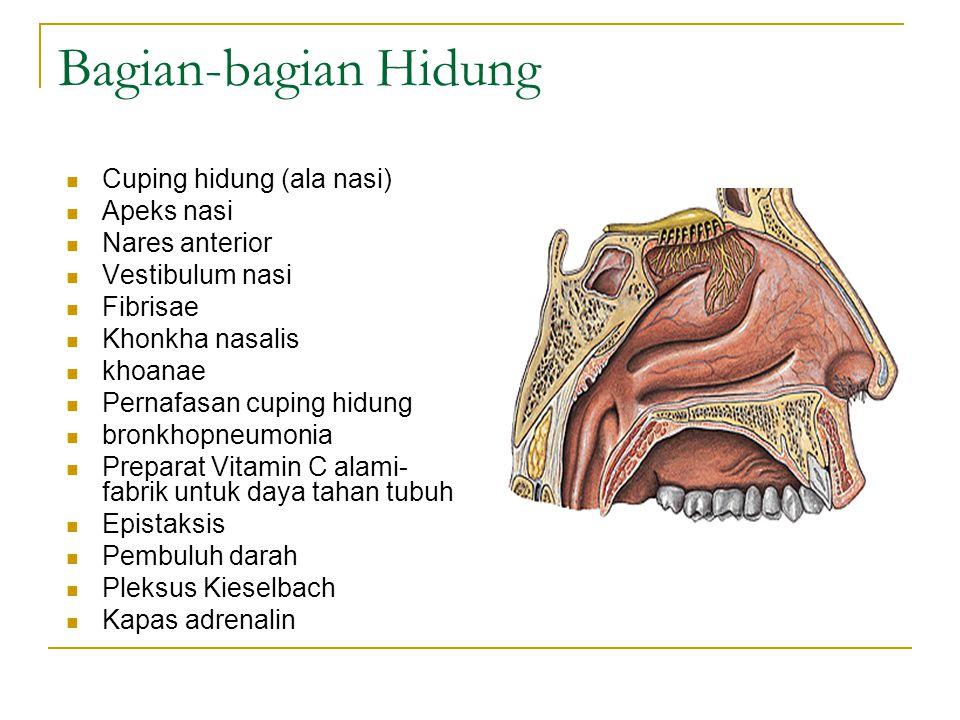 Bagian-bagian Hidung Cuping hidung (ala nasi) Apeks nasi