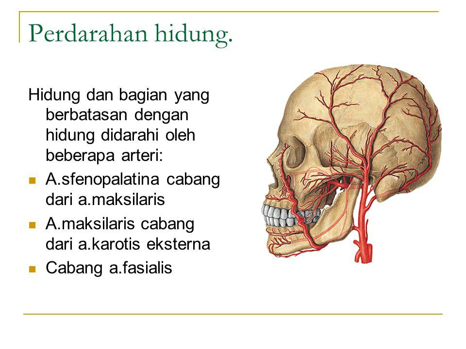 Perdarahan hidung. Hidung dan bagian yang berbatasan dengan hidung didarahi oleh beberapa arteri: A.sfenopalatina cabang dari a.maksilaris.