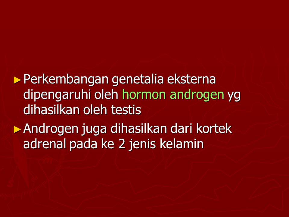 Perkembangan genetalia eksterna dipengaruhi oleh hormon androgen yg dihasilkan oleh testis