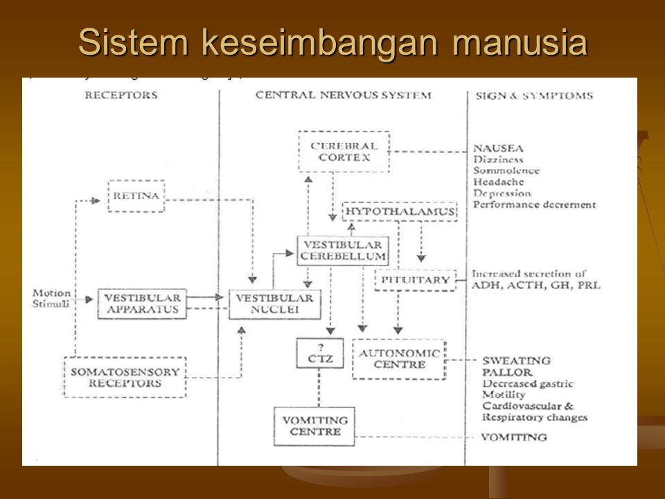 Sistem keseimbangan manusia