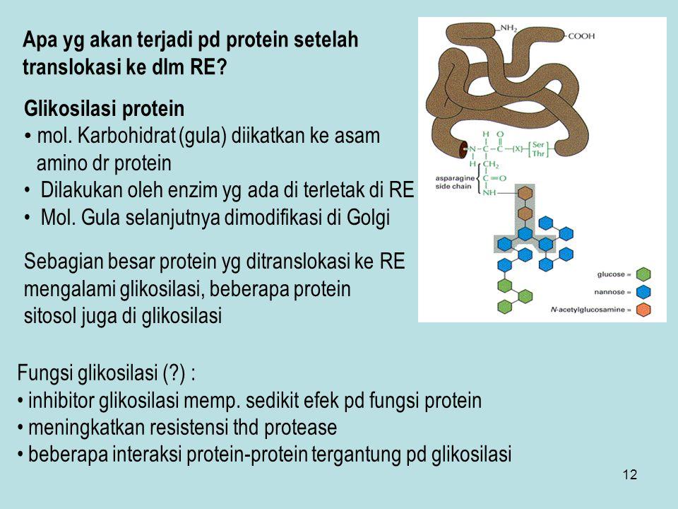 Apa yg akan terjadi pd protein setelah translokasi ke dlm RE