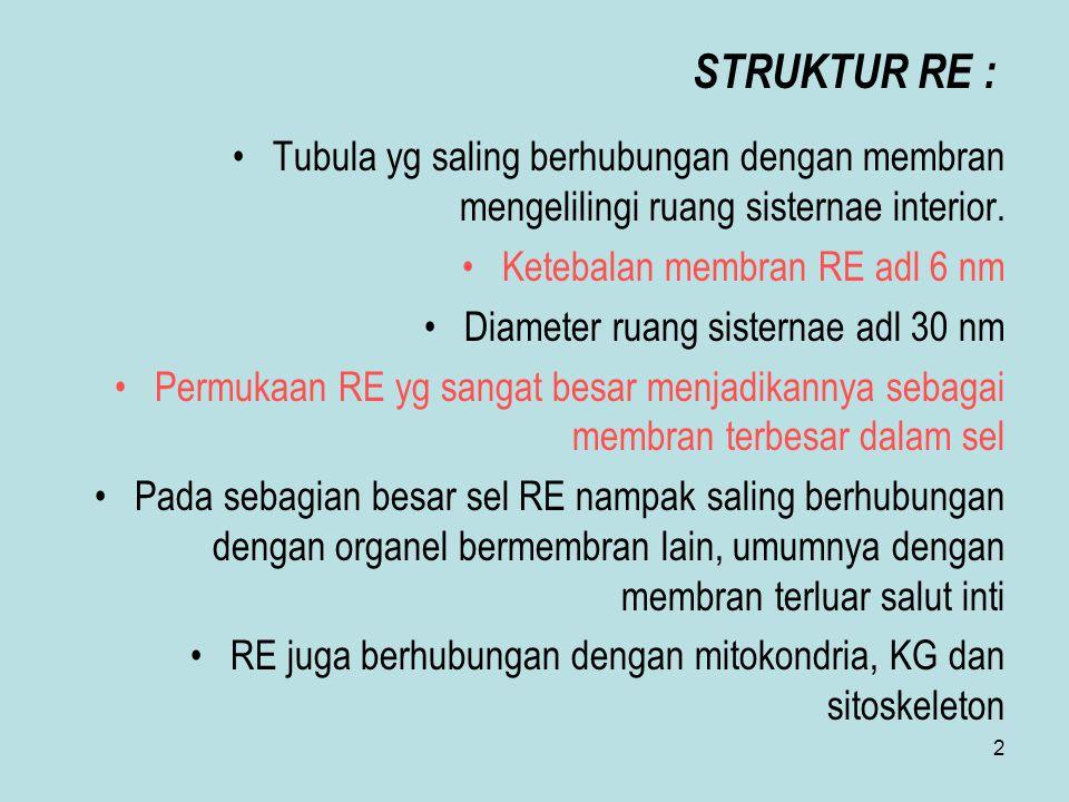 STRUKTUR RE : Tubula yg saling berhubungan dengan membran mengelilingi ruang sisternae interior. Ketebalan membran RE adl 6 nm.