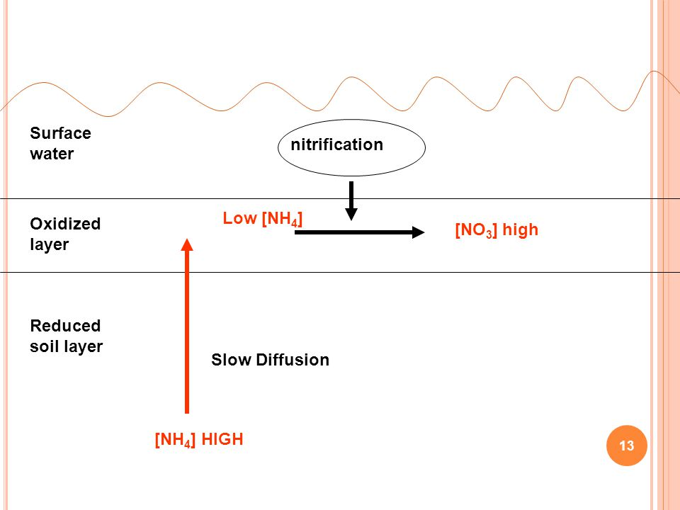 Surface water nitrification. Low [NH4] Oxidized layer. [NO3] high. Reduced soil layer. Slow Diffusion.