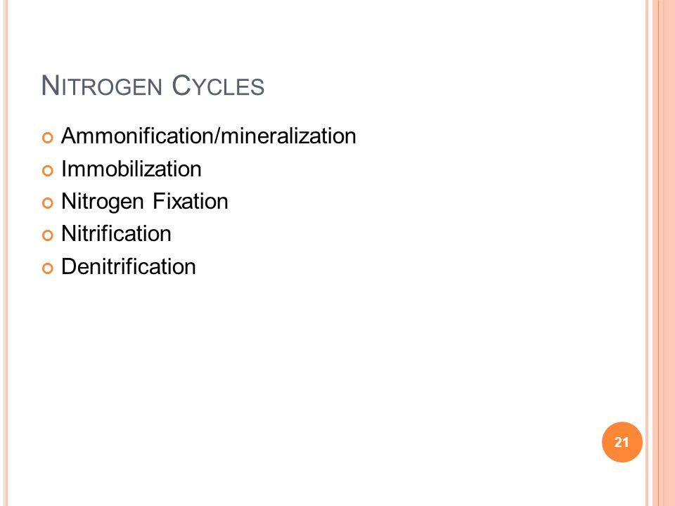 Nitrogen Cycles Ammonification/mineralization Immobilization