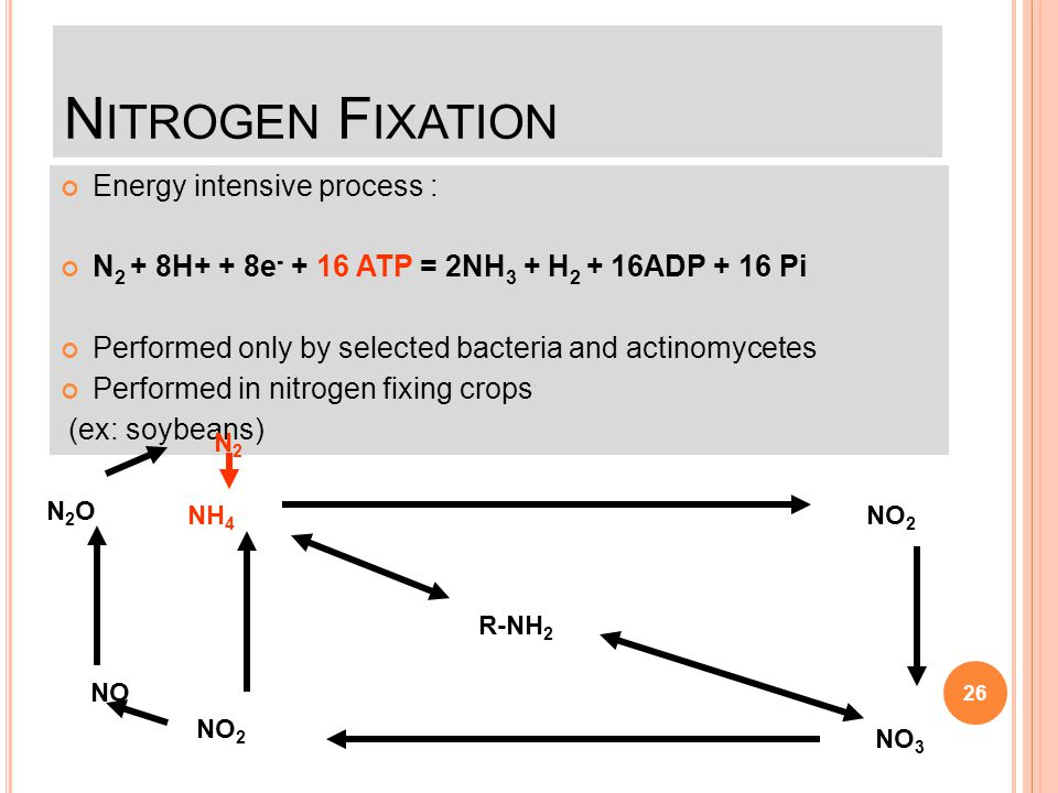 Nitrogen Fixation Energy intensive process :