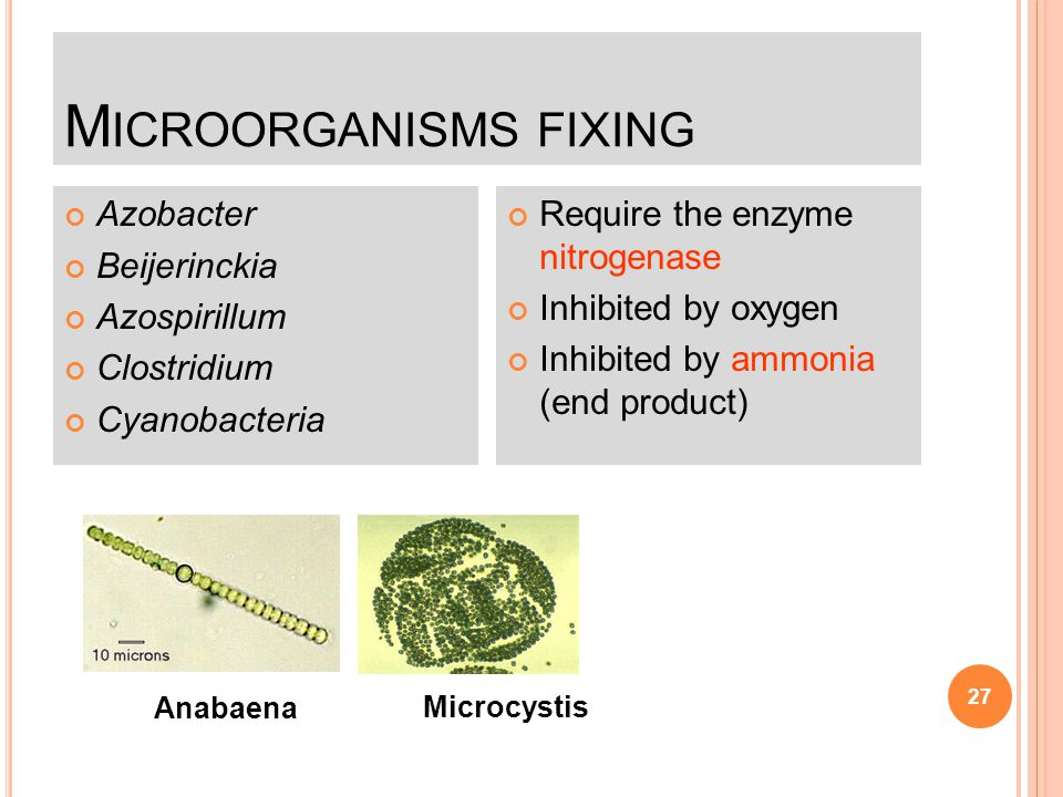 Microorganisms fixing