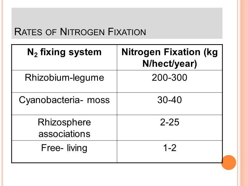 Rates of Nitrogen Fixation