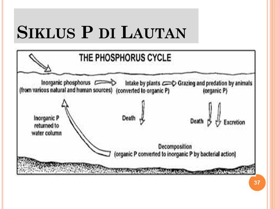 Siklus P di Lautan