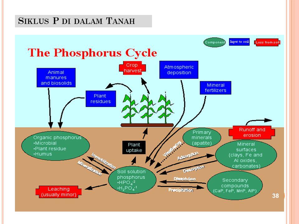 Siklus P di dalam Tanah