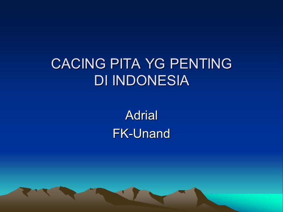 CACING PITA YG PENTING DI INDONESIA