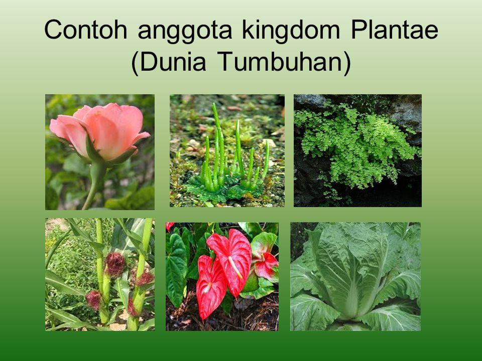 Contoh anggota kingdom Plantae (Dunia Tumbuhan)