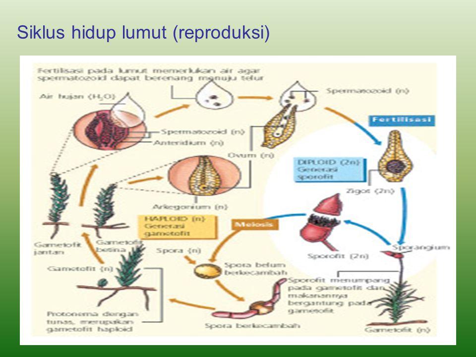 Siklus hidup lumut (reproduksi)