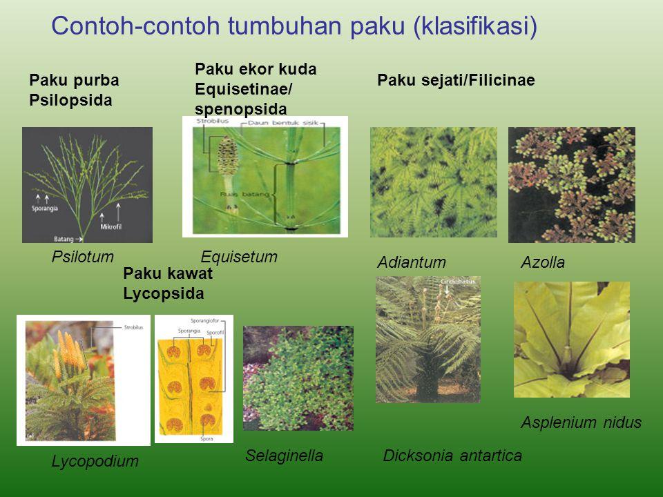 Contoh-contoh tumbuhan paku (klasifikasi)