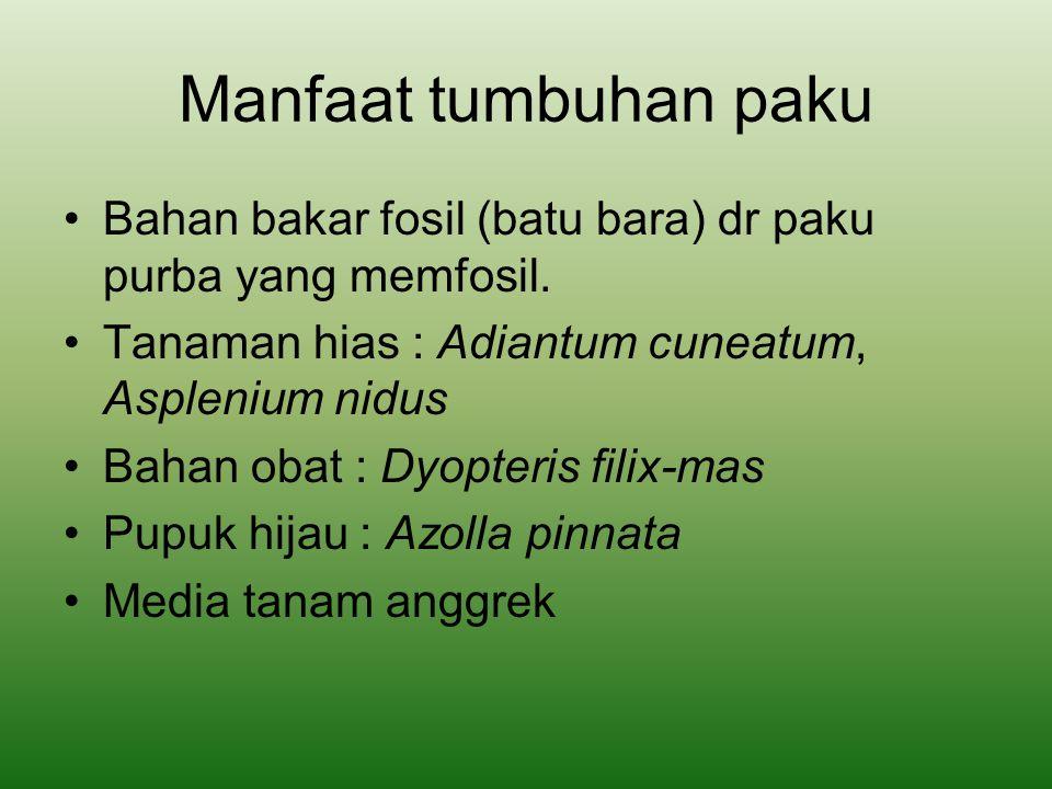 Manfaat tumbuhan paku Bahan bakar fosil (batu bara) dr paku purba yang memfosil. Tanaman hias : Adiantum cuneatum, Asplenium nidus.