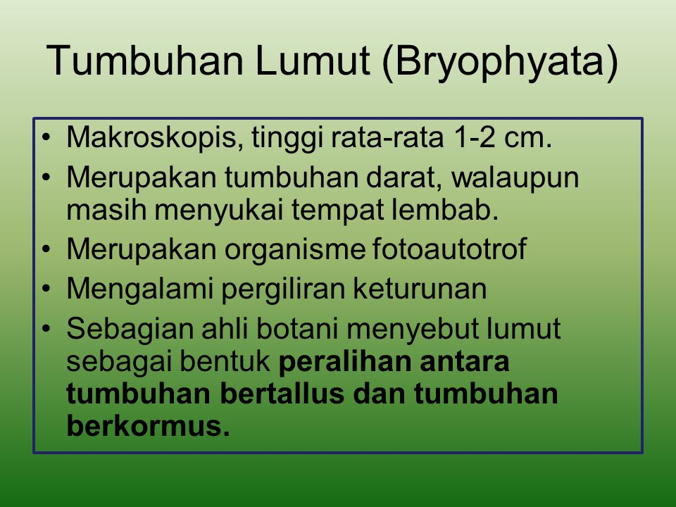 Tumbuhan Lumut (Bryophyata)
