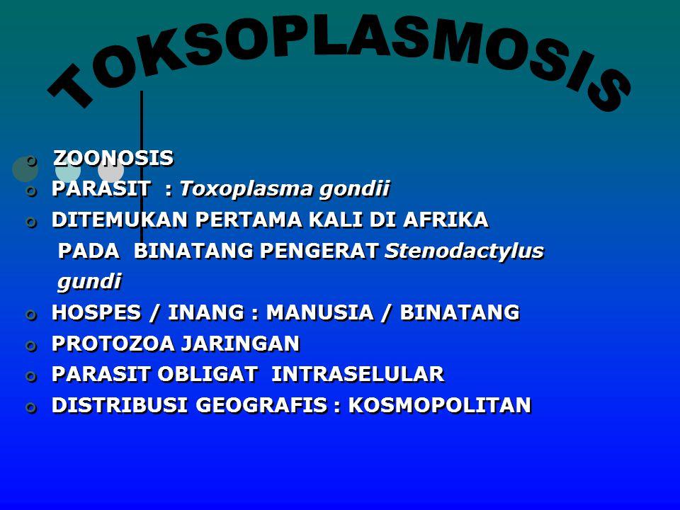 TOKSOPLASMOSIS ZOONOSIS PARASIT : Toxoplasma gondii