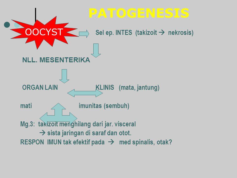 PATOGENESIS OOCYST Sel ep. INTES (takizoit  nekrosis)