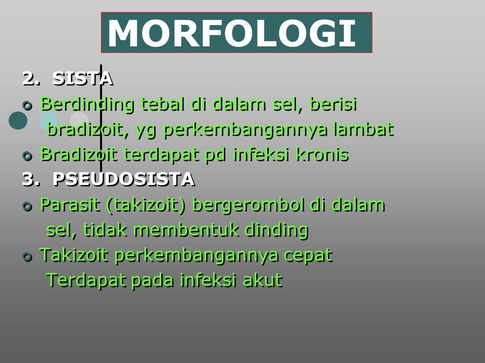 MORFOLOGI 2. SISTA Berdinding tebal di dalam sel, berisi