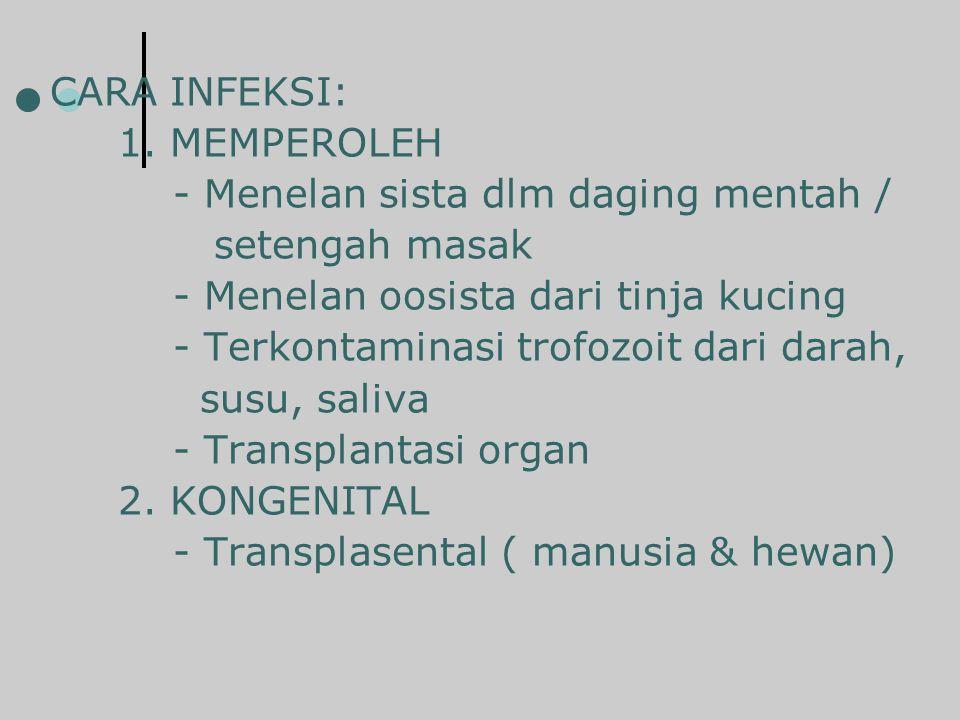 CARA INFEKSI: 1. MEMPEROLEH - Menelan sista dlm daging mentah /