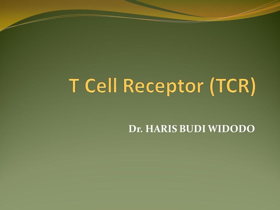 T Cell Receptor (TCR) Dr. HARIS BUDI WIDODO