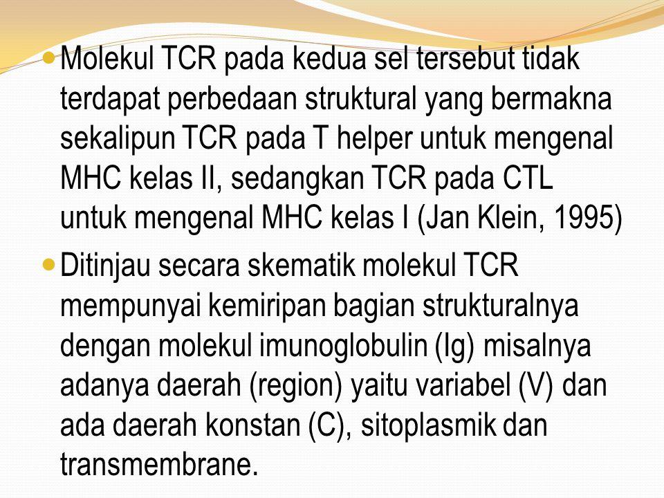 Molekul TCR pada kedua sel tersebut tidak terdapat perbedaan struktural yang bermakna sekalipun TCR pada T helper untuk mengenal MHC kelas II, sedangkan TCR pada CTL untuk mengenal MHC kelas I (Jan Klein, 1995)