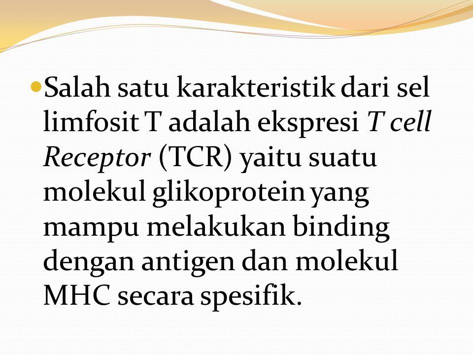 Salah satu karakteristik dari sel limfosit T adalah ekspresi T cell Receptor (TCR) yaitu suatu molekul glikoprotein yang mampu melakukan binding dengan antigen dan molekul MHC secara spesifik.