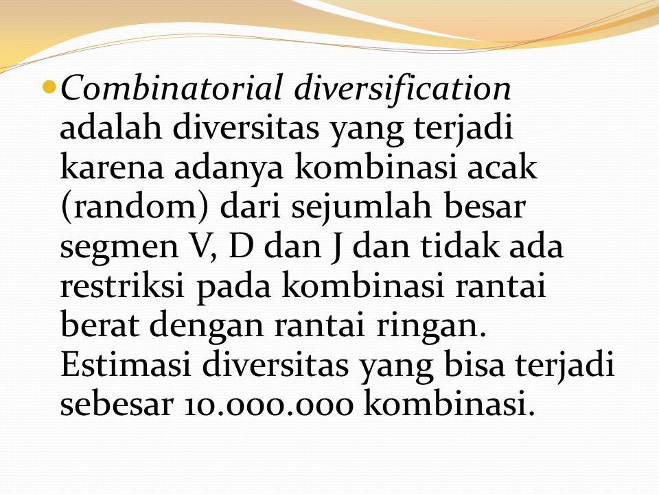 Combinatorial diversification adalah diversitas yang terjadi karena adanya kombinasi acak (random) dari sejumlah besar segmen V, D dan J dan tidak ada restriksi pada kombinasi rantai berat dengan rantai ringan.