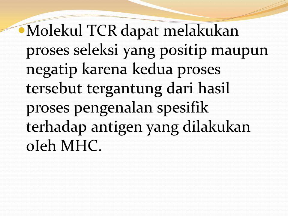 Molekul TCR dapat melakukan proses seleksi yang positip maupun negatip karena kedua proses tersebut tergantung dari hasil proses pengenalan spesifik terhadap antigen yang dilakukan oIeh MHC.