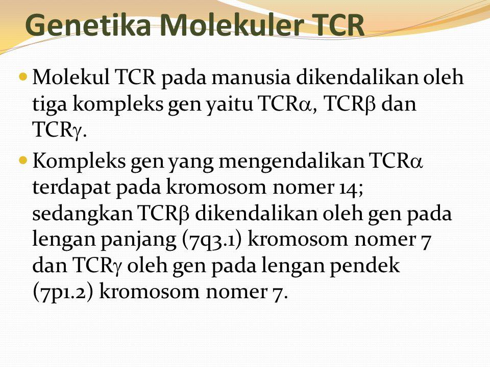 Genetika Molekuler TCR