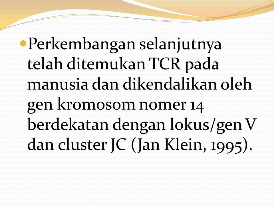 Perkembangan selanjutnya telah ditemukan TCR pada manusia dan dikendalikan oleh gen kromosom nomer 14 berdekatan dengan lokus/gen V dan cluster JC (Jan Klein, 1995).