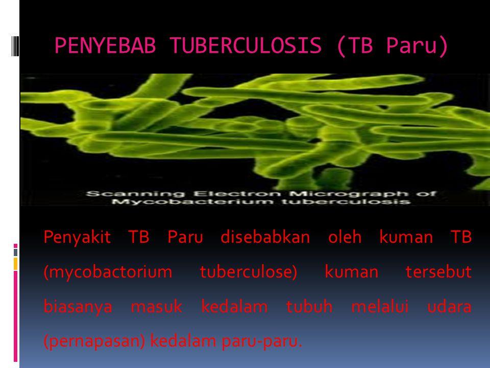 PENYEBAB TUBERCULOSIS (TB Paru)