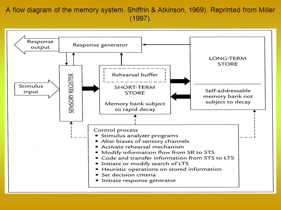 A flow diagram of the memory system. Shiffrin & Atkinson, 1969)