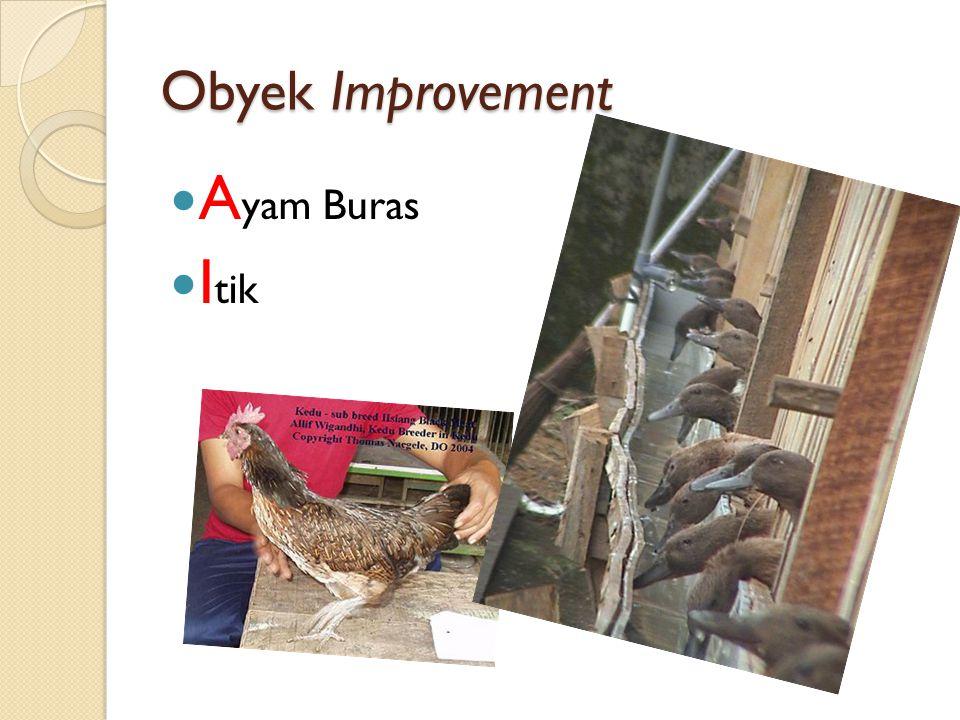 Obyek Improvement Ayam Buras Itik