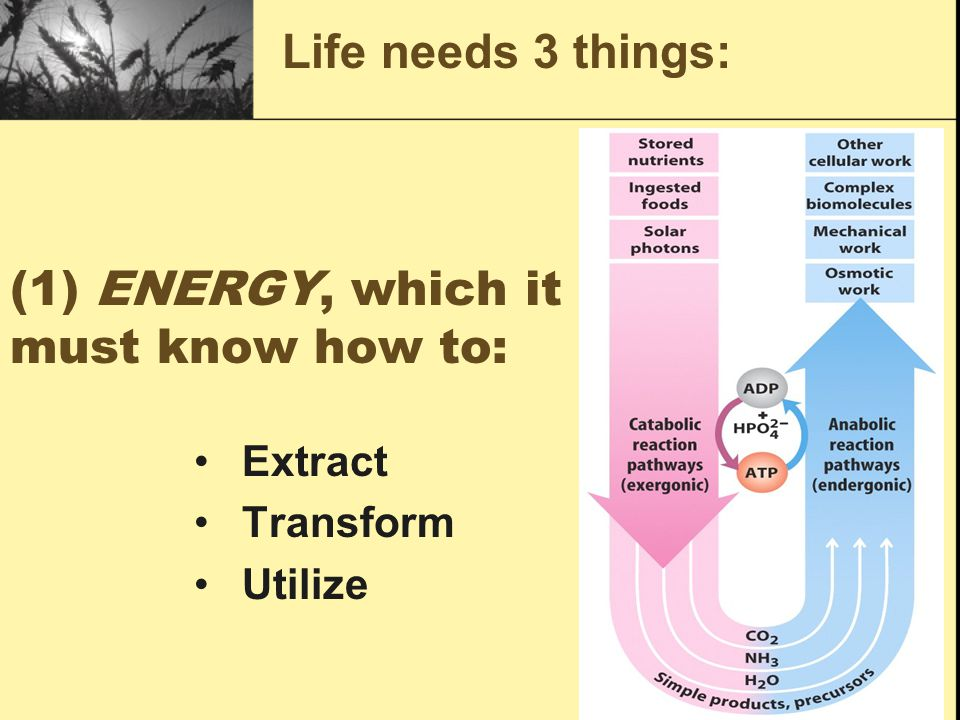 (1) ENERGY, which it must know how to: