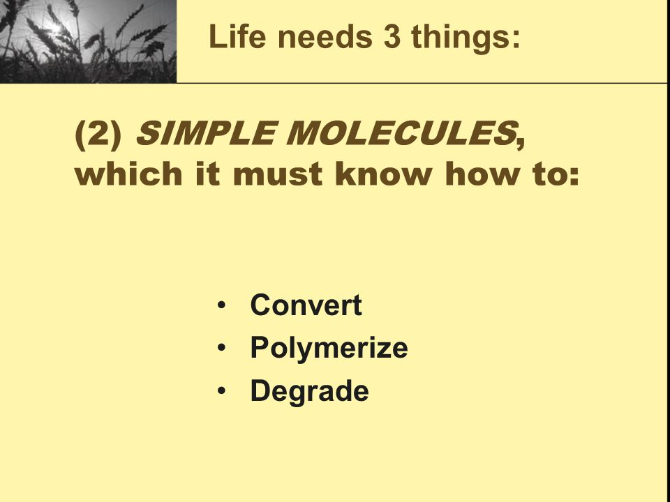 (2) SIMPLE MOLECULES, which it must know how to: