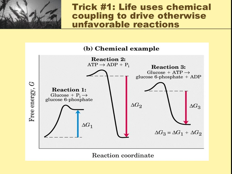 Trick #1: Life uses chemical coupling to drive otherwise unfavorable reactions
