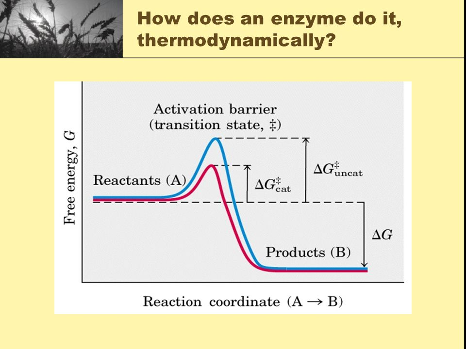 How does an enzyme do it, thermodynamically