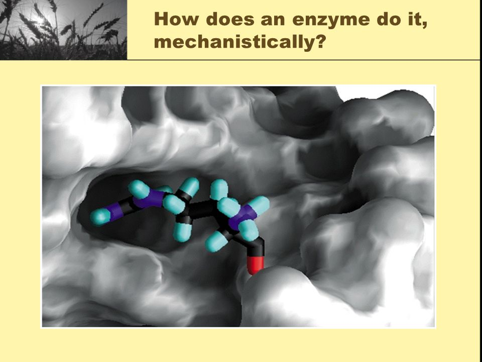 How does an enzyme do it, mechanistically