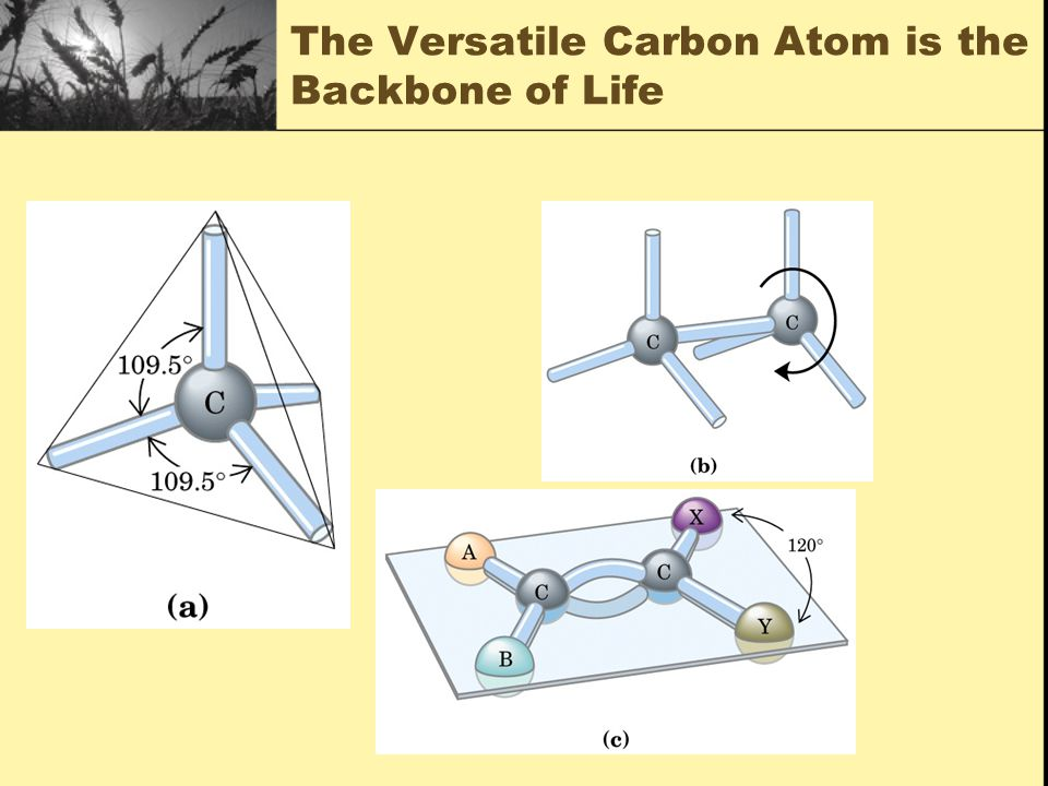 The Versatile Carbon Atom is the Backbone of Life